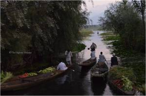 Vegetable market in the morning - Dal lake